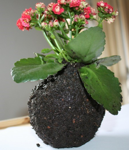 Kokedama el arte de las plantas flotantes forja - Forja hispalense ...